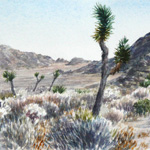View of Joshua Tree National Park